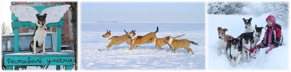 Russian Smooth Collie Club