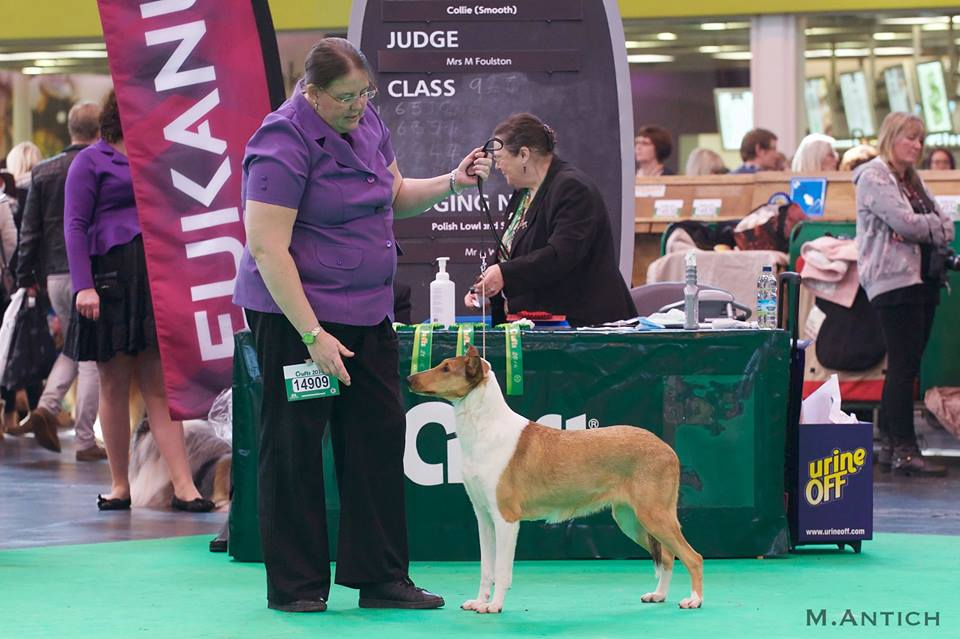 Natalain Kilkenny at Willowhurst на Crufts-2016